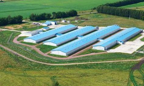 Юкрейн Шугар Компані розширить земельний банк і придбає цукрозаводи фото, ілюстрація