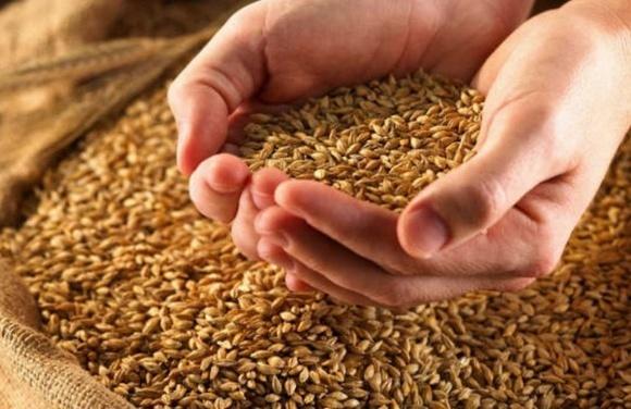 Агролайфхак: хранение зерна под пленкой по-австралийски фото, иллюстрация