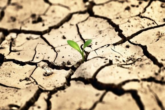 Посуха загрожує посівам озимих врожаю-2019 в Європі фото, ілюстрація
