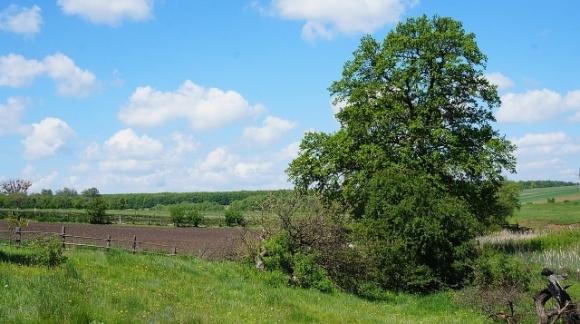 Активисты выиграли дело у фермера, который арендовал землю на территории государственного заказника  фото, иллюстрация