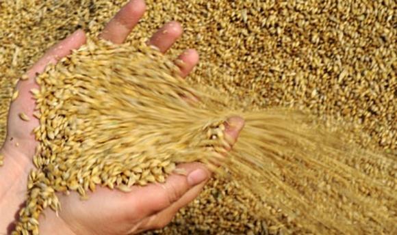Аграрный фонд начал форвардные закупки зерна на агробирже фото, иллюстрация