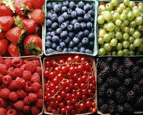 Ягідні господарства України просять адаптувати під них держпрограму дотацій на холодильники фото, ілюстрація