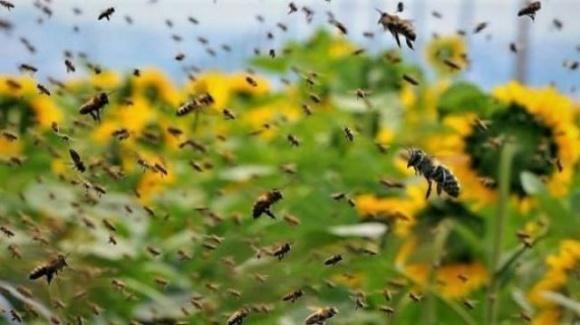 За останні 30 років у світі зникла майже чверть видів бджіл фото, ілюстрація