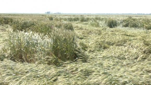 У Запорізькій області через погодні умови може суттєво знизитися врожайність зернових фото, ілюстрація
