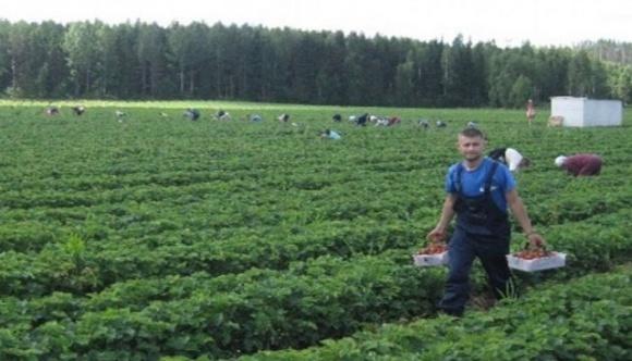 Уряд розглядатиме кожен запит щодо сезонних працівників із України окремо фото, ілюстрація
