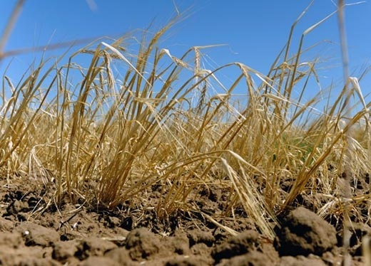 Аномальная жара в Украине продлится до середины августа фото, иллюстрация