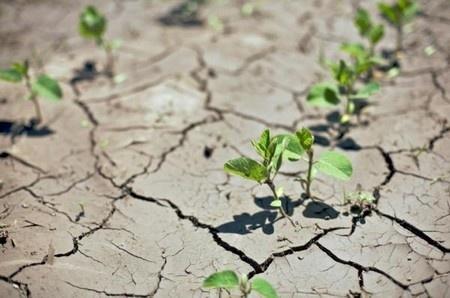 Посуха в Україні 2007 року, її наслідки та виклики фото, иллюстрация