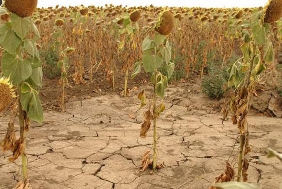 Инвестирование в фермеров поможет справиться с засухой, - FAO фото, иллюстрация