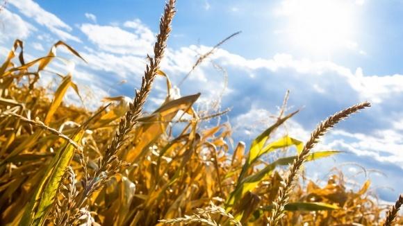 Летняя засуха станет испытанием для аграриев Украины фото, иллюстрация