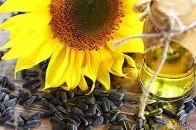 Kernel планує в 2019 році переробити більше 3 млн.тонн соняшникового насіння фото, ілюстрація