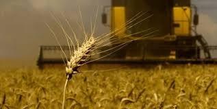 Под снегом осталось 5% поздних зерновых фото, иллюстрация