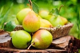 Фермери Бельгії і Нідерландів контрабандно возять груші до РФ в обхід санкцій – ЗМІ фото, ілюстрація