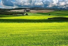 Рада продлила запрет на продажу сельхозземли еще на год фото, иллюстрация