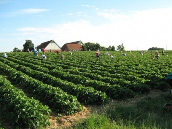 В Эстонии жалуются на дефицит рабочей силы в агросекторе из-за закрытия границ фото, иллюстрация