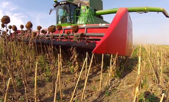 Урожайность подсолнечника на старте уборки на 20% ниже прошлогодней фото, иллюстрация