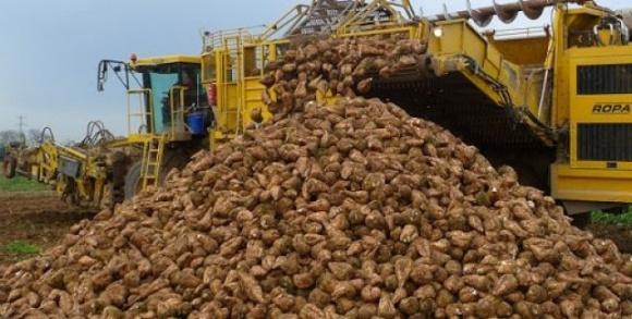 В Украине практически завершилась уборка сахарной свеклы фото, иллюстрация