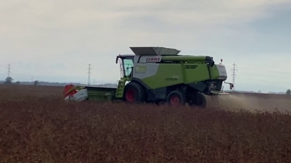 В Запорожской области начали собирать урожай гречихи и подсолнечника  фото, иллюстрация