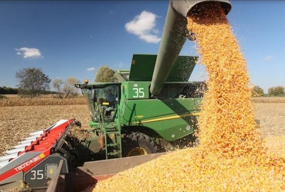В Україні розпочали збирати кукурудзу фото, ілюстрація