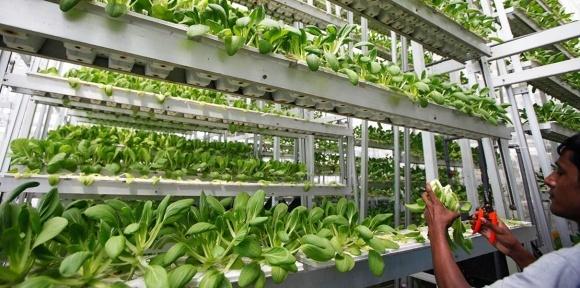 Врожаї вертикальної ферми Plenty в 350 раз більші, ніж у теплиці фото, ілюстрація
