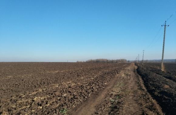 В Киевской области уничтожили 250 участков атошников вместе с рассадой и саженцами фото, иллюстрация
