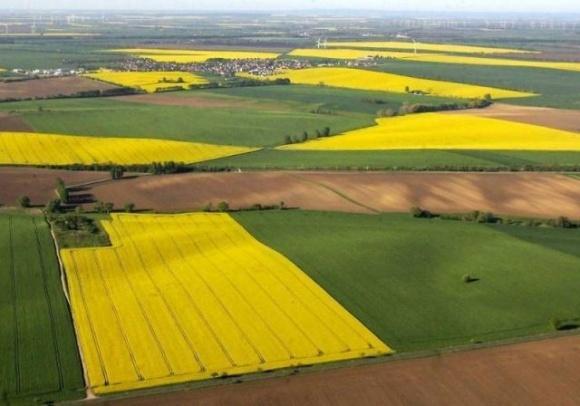 Нардепы предлагают продлить запрет отчуждения сельскохозяйственных земель до 2023 года  фото, иллюстрация
