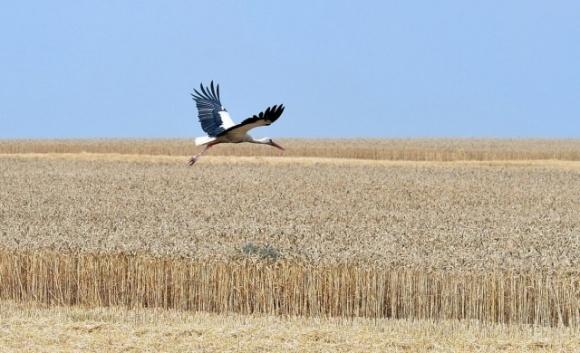 Представитель МВФ в Украине: Земельная реформа должна стимулировать развитие устойчивого и эффективного фермерства фото, иллюстрация