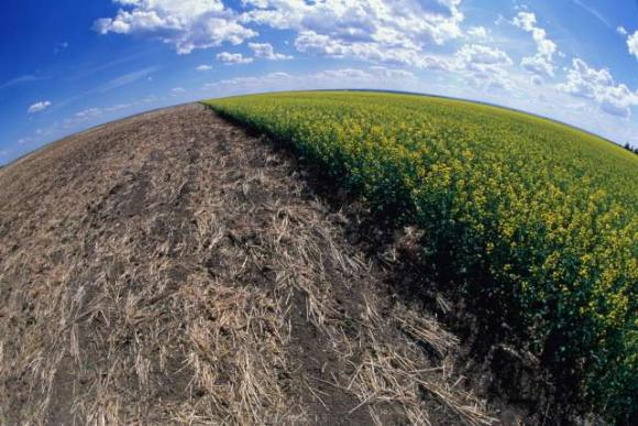 Треть земель на планете уничтожена из-за сельского хозяйства фото, иллюстрация