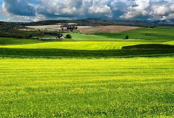 Шотландское правительство освободит часть государственных земель для новых фермеров фото, иллюстрация