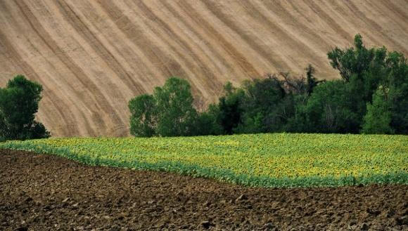 На Чернігівщині пайщиків переманюють збільшенням розміру орендної плати фото, ілюстрація