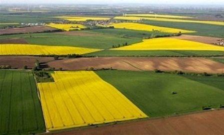 Надходження від оренди державних сільгоспугідь за 4 роки зросли в 20 разів фото, ілюстрація