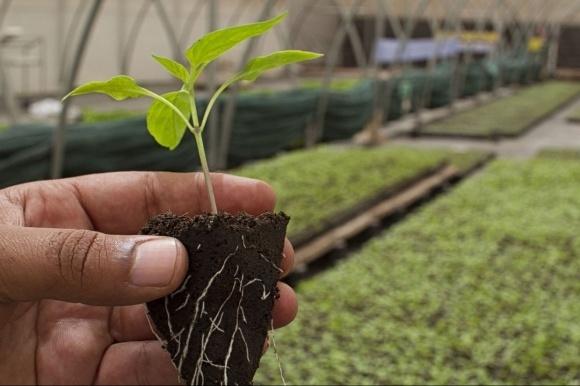 Законопроект про передачу фермерських земель у власність фермерам посилить розвиток малого бізнесу фото, ілюстрація