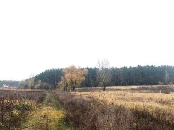 Землю на Вишгородщине стоимостью 21 млн вернули государству фото, иллюстрация
