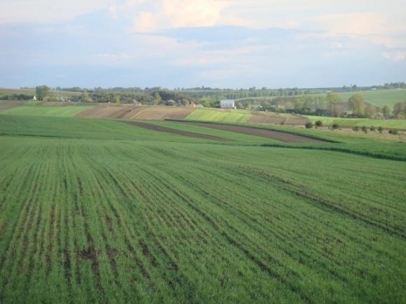 На Кировоградщине агрофирму заставили вернуть государству почти 150 гектаров земли фото, иллюстрация