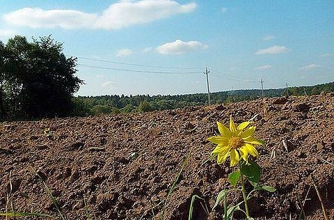 На Харківщині захоплюють агропідприємства із землею та врожаєм фото, ілюстрація