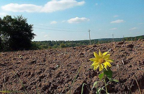 На Харьковщине захватывают агропредприятия с землей и урожаем фото, иллюстрация