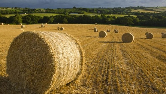 Уповноважений Зеленського обіцяє компроміс по ліміту площі землеволодіння фото, ілюстрація
