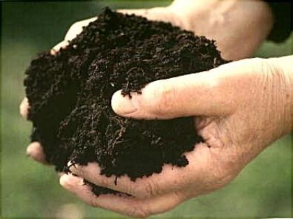 Плодородие почв в Украине резко ухудшается, - НААН фото, иллюстрация