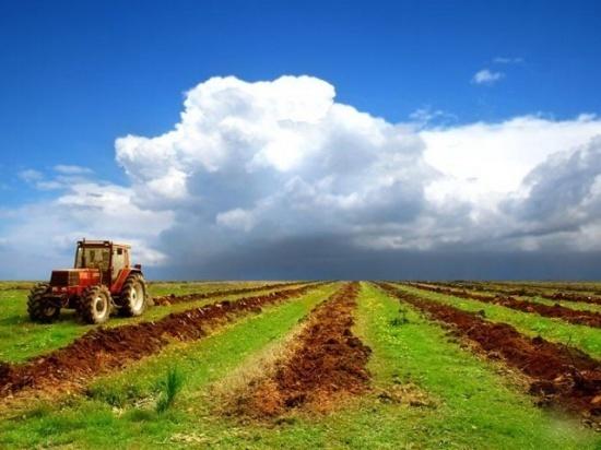 Житомирщина повернула через суд 722 га фермерських угідь фото, ілюстрація