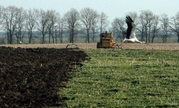 Рынок земли должен быть подчинен зажиточным крестьянам, - президент НААН фото, иллюстрация
