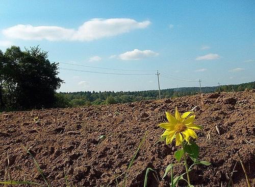 Внесенные в ВРУ законопроекты об обороте сельхозземель имеют существенные недоработки фото, иллюстрация