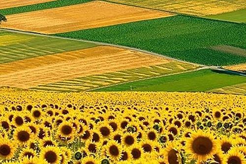Рынок земли: Аграрный комитет изучит возможность повторного рассмотрения законопроектов фото, иллюстрация