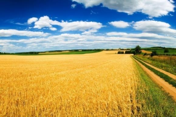 Земля і вірус: як владі підтримати фермера фото, ілюстрація