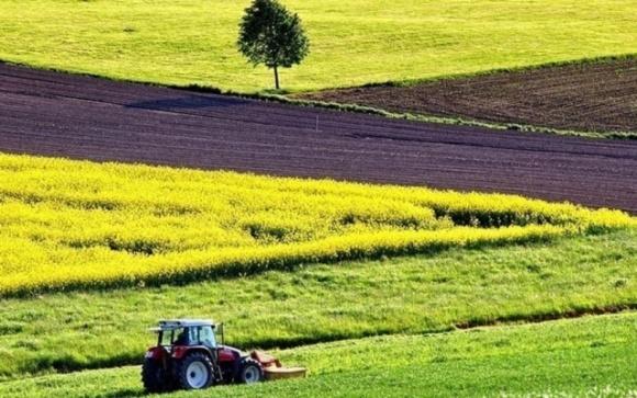 По-настоящему рынок земли в Украине откроется в 2024 г., — эксперт фото, иллюстрация