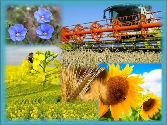 ПроАгро уточнило прогноз производства зерновых и масличных на 2021/22 МГ  фото, иллюстрация