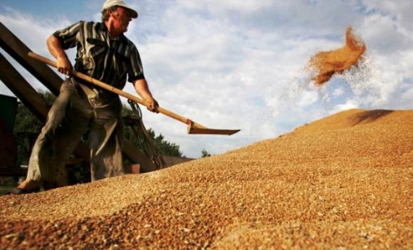 Мировые запасы зерновых близки к рекордным, - FАО фото, иллюстрация