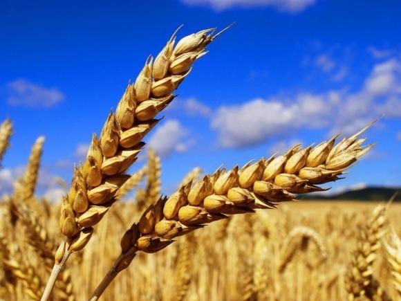 Прогноз мировых запасов зерновых в 2017/18 МГ увеличен до 726 млн т фото, иллюстрация