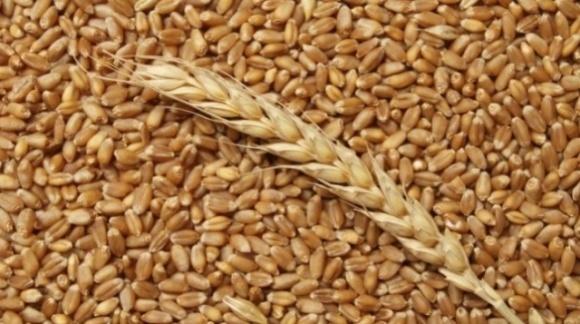 Основным драйвером роста цен в портах Украины выступает пшеница  фото, иллюстрация