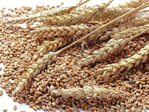 Майже 800 грн. на тоні зернових аграрії втрачають через колапс на залізниці, - Козаченко фото, ілюстрація