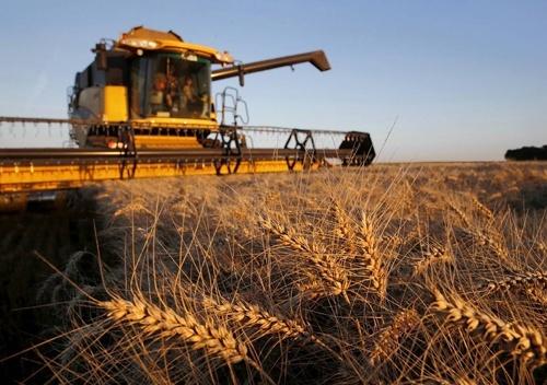 Сьогодні немає жодних підстав вважати, що врожай ранніх зернових-2019 буде нижчим за минулорічний, - Володимир Топчій фото, ілюстрація