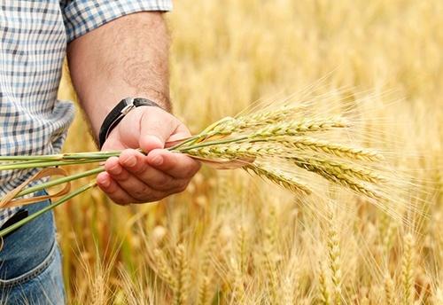 Аграрии Сумской области намолотили более 3 млн. тонн зерна фото, иллюстрация